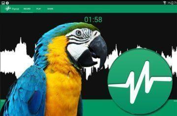 parrot_ico