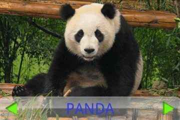 Toddler Tapping Zoo – Panda