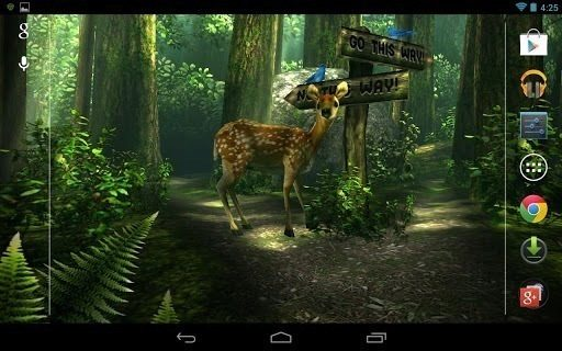 forest hd main