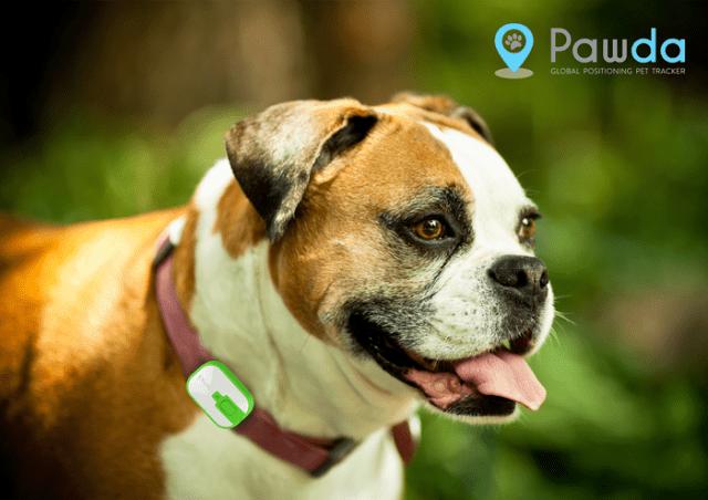 Pawda - GPS tracker pro domácí mazlíčky