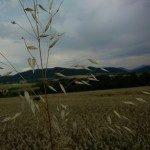 OnePlus One ukázková fotografie 4