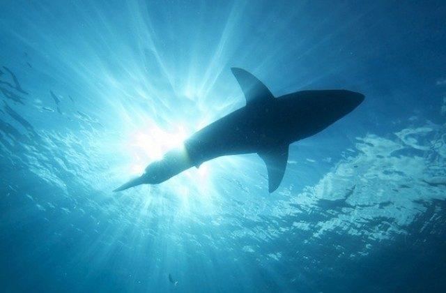 shark kabel