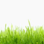 tapeta_sony_xperia_z3_svetandroida-czdewy_grass_hd1080p