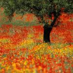 tapeta_sony_xperia_z3_svetandroida-czflowers_forever_hd1080p