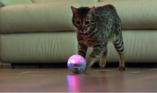 Orbotix Sphero 2.0 a domácí mazlíček