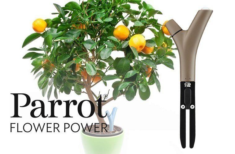 Flower Power nahledovy