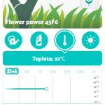 Flower Power teplota live