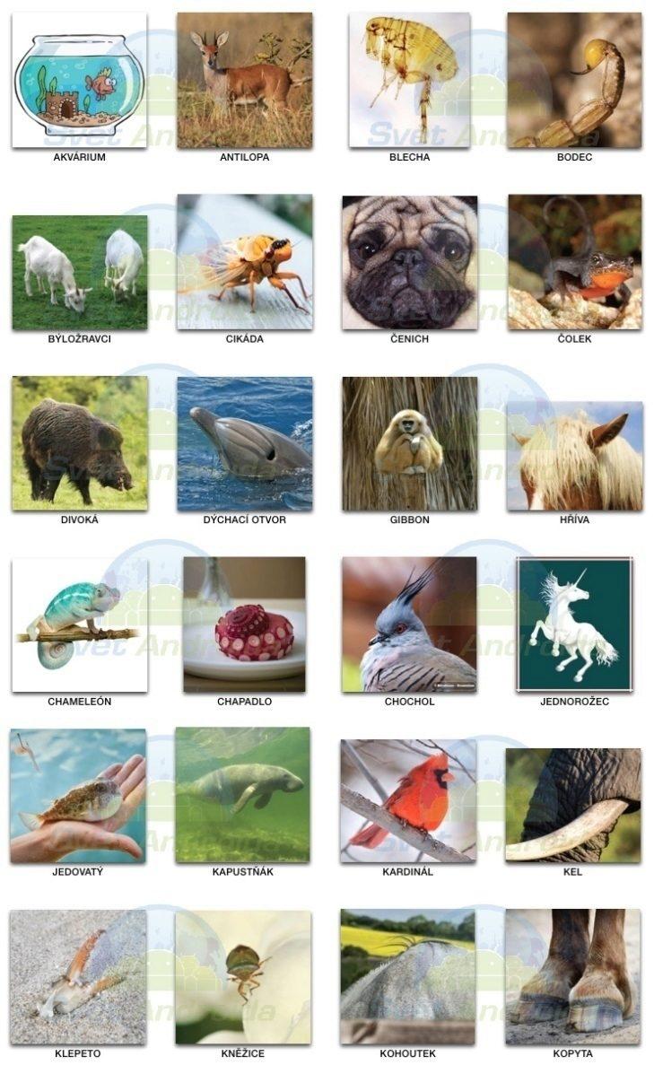 pixwords_zvířata 0