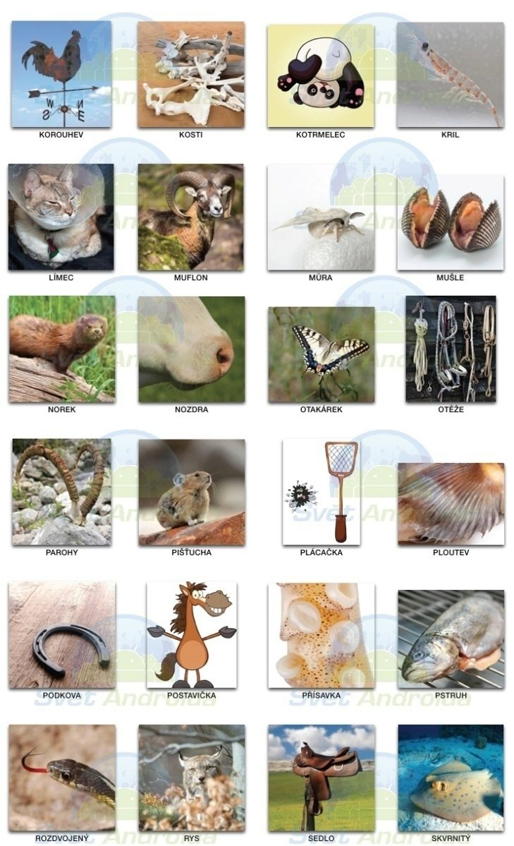 pixwords_zvířata 1