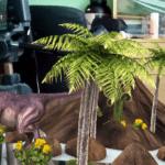 Sony Xperia E4g – aplikace fotoaparát, efekt dinosaur