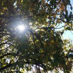 Fotka ve formátu JPEG