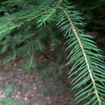 Meizu M2 Note – pořízené fotografie (9)