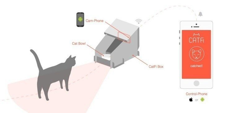 catfi box