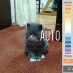 Asus ZenFone 2 Laser – fotoaparát – manuální režim 4