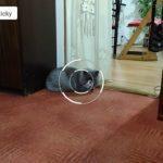 Asus ZenFone 2 Laser – fotoaparát – průběh ostření
