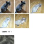 Google Fotky – aktualizace – rozbalovací tlačítko (1)