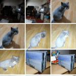 Google Fotky – aktualizace – rozbalovací tlačítko (2)