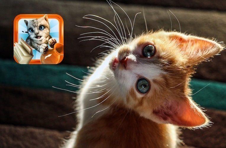 18 oholil kočička