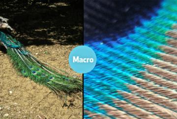 Takto vypadá záběr s čočkou BLIPS Macro