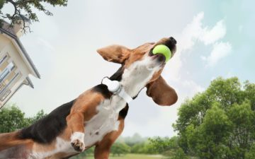 Mishiko: fitness obojek pro psa