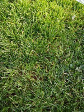 Záběr na trávník