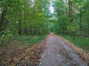 Lesní cesta podvečer