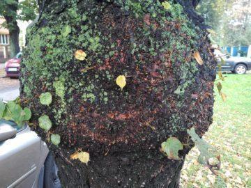 Detail stromu