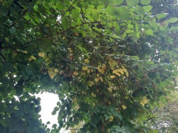 Listí na stromě