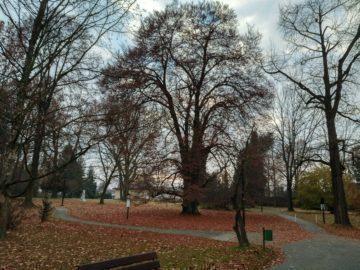 Třebovický park