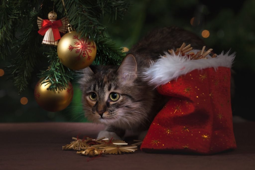 Vánoce se blíží. Už je vyhlížíte?