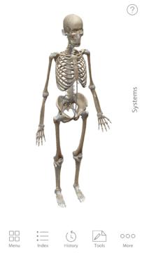 Anatomie cloveka (1)