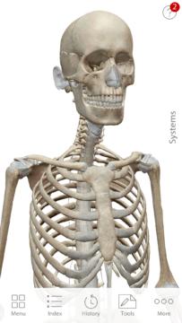Anatomie cloveka (11)