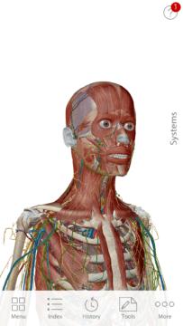 Anatomie cloveka (2)