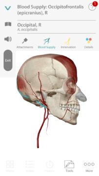 Anatomie cloveka (3)