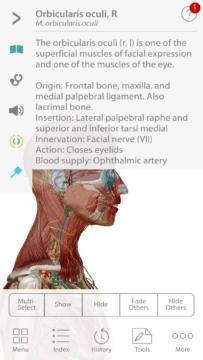 Anatomie cloveka (4)