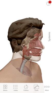 Anatomie cloveka (5)