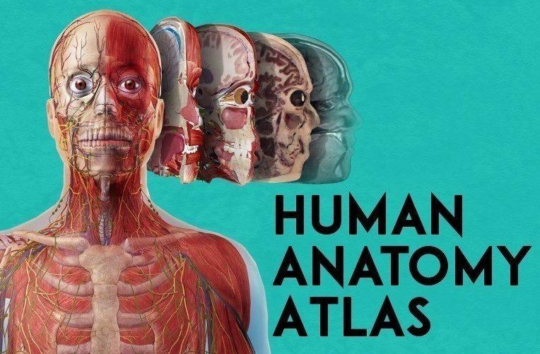 anatomie cloveka