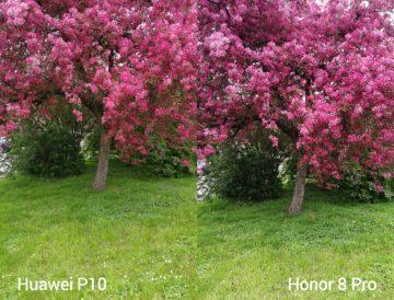 porovnani foto – P10 vs 8 Pro 3