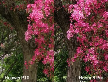 porovnani foto – P10 vs 8 Pro 4
