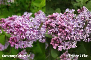 porovnani foto – S8 vs iP 7 P 1
