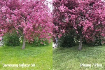 porovnani foto – S8 vs iP 7 P 2