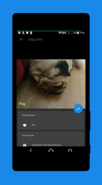 dog-lens-recognise-breed-3-1