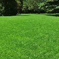 trávník