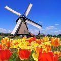 nizozemský