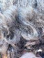 šedý vlas
