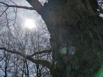 Huawei-P20-Pro-fotografie-slunce