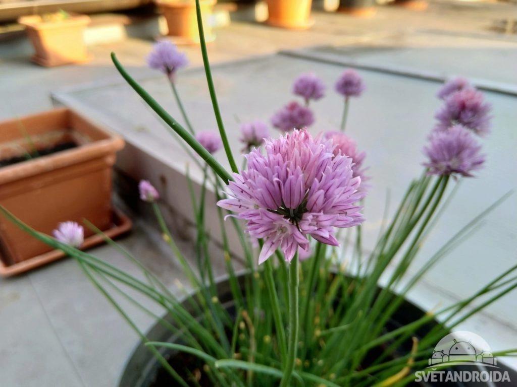 Nokia 6.1 foto kvetina