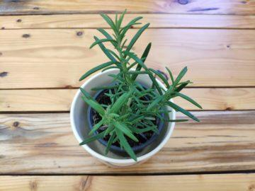 fotografie detail mi mix 2S rostlina