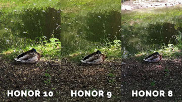 honor 8 fotí skvěle - kachna