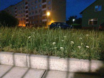 Asus ZenFone fotografie spatne svetelne podminky